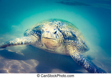 Sea turtle underwater at Hikkaduwa beach