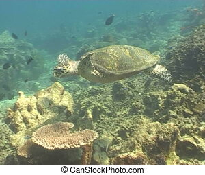sea turtle underwater diving video - underwater diving video