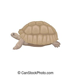 Sea turtle wild animal vector Illustration on a white background