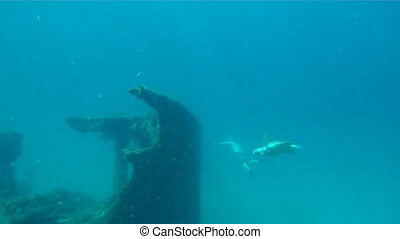 Sea Turtle With Diver Underwater