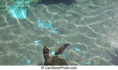 Sea turtle with fishes swimming in aquarium. Underwater Observatory Marine Park. Eilat, Israel