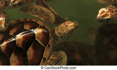 Sea Turtles Farm - sea turtles farm