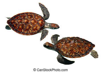 Isolated sea turtles