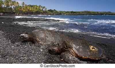 Sea Turtles on Beach 1