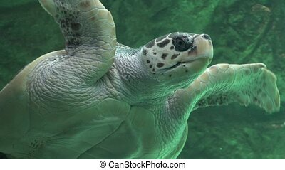 Sea Turtles Reptiles And Wildlife