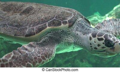 Sea Turtles Swimming In Water