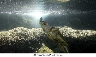 Sea Turtles. Underwater Observatory Marine Park. Eilat, Israel