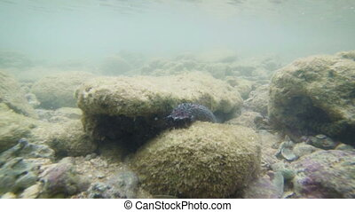 Sea %u200B%u200Bcucumber and fishes on bottom
