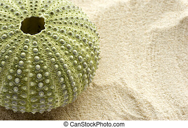 Sea Urchin and Sand - Detail of a sea urchin on sand with...