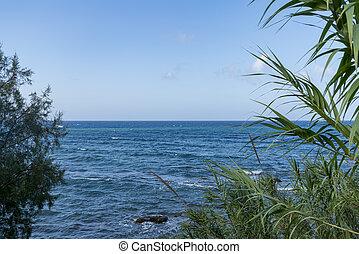 sea view through reeds with blue sky