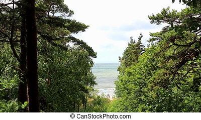 Sea view through the tree gap - Sea view through the gap...