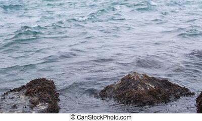 Sea waves rock water - The storm sea, the waves crashing...