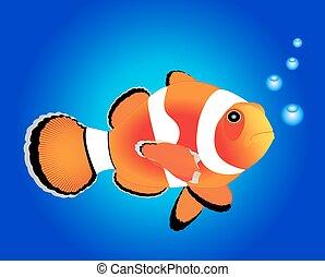 sea with a nemo fish