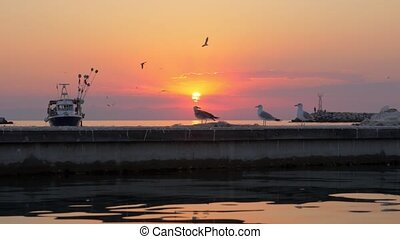 Sea with boat and seagulls at sunset