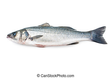 Seabass, Dicentrarchus labrax. Isolated on the white...