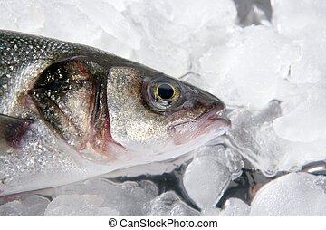 seabass fish  on ice