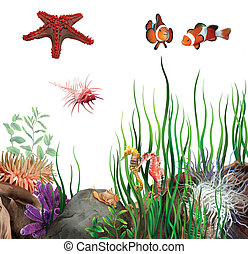 seabed. On the bottom of the ocean. Sea star, clown fish, ...