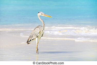 seabird at beach of Maldives