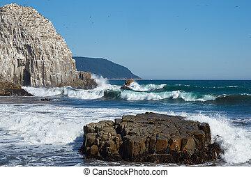 Seabird Colonies on Coast of Chile - Large rocks on the...