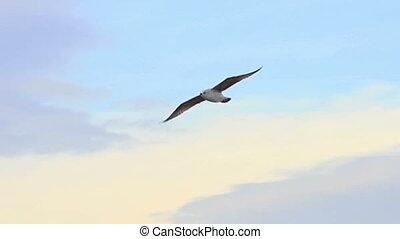 Sea bird soaring through blue sky