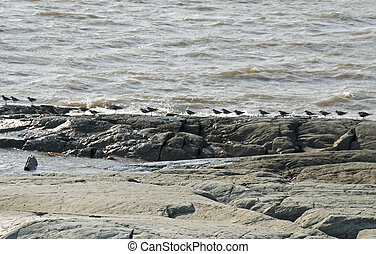 Seabirds lined up on a river shore