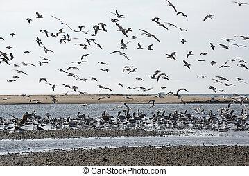 Seabirds on a Pacific Ocean tidal flat
