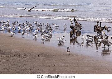 Seabirds on an ocean shore
