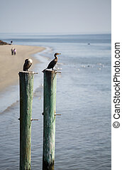 Seabirds on Posts with Beach in Background