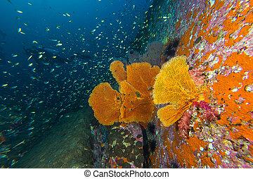 Seafan in coral reef