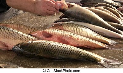 Seafood at a local street market. - Fresh carp is sale on...