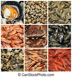 seafood collage - a collage of nine pictures of different ...