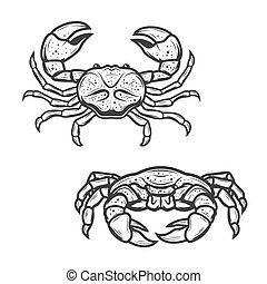 Seafood crab, marine crustacean lobster