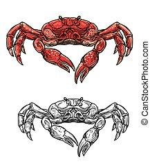 Seafood crab, marine crustacean sketch