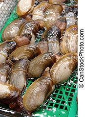 Seafood: Elephant trunk clam - Seafood: Live elephant trunk ...