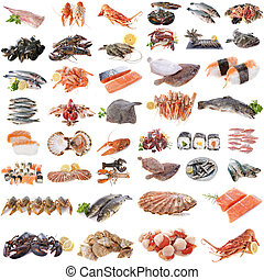 seafood, fish and shellfish in front of white background