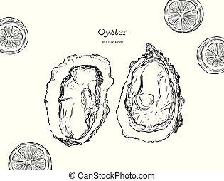 seafood., illustration, vecteur, huîtres, frais, huîtres, luxe