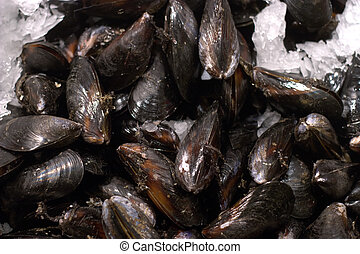 Seafood Market - Mussels - Mussels on display in Seattle's ...