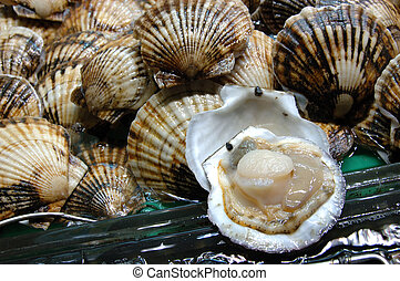 Seafood: Scallop - Seafood: live scallop