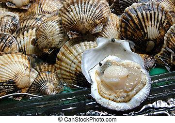 Seafood: live scallop