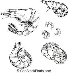 Seafood. Shrimps. Hand drawn illustration.