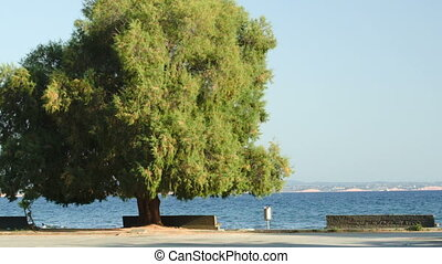Seafront with benches and green tree - Empty seafront with...