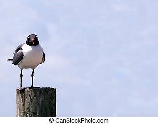 Seagul on a post