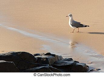 Seagul walking on beach by some rocks