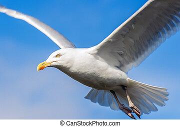 Seagul with blue sky