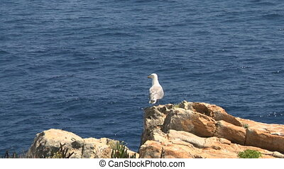 seagull 05 - Seagull on coast