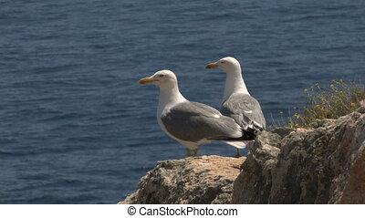seagull 08