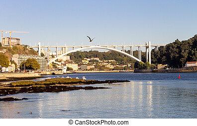 Seagull Above Arrabida Bridge