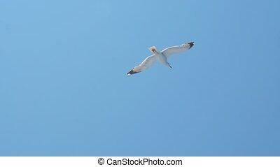 Seagull above blue sea. Bird among the sea. Wild bird flying...