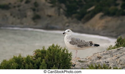 Seagull against beautiful sea - Lonely bird sitting on the...