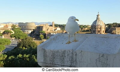 Seagull against scenic view of Rome with Colosseum and Roman...